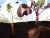 dibujo_gardening1